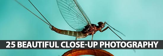 Beautiful Close-up Photography - Best Post Of 2012