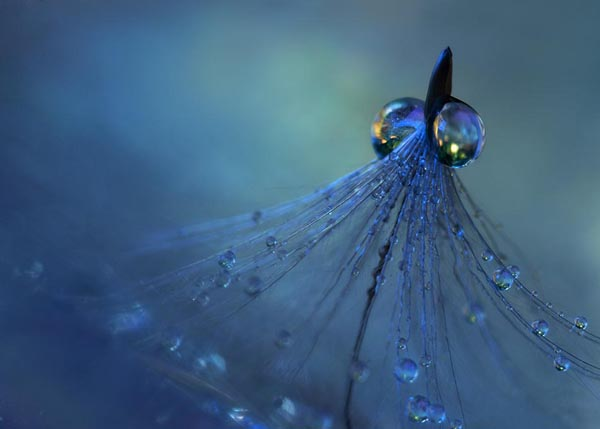 25 Beautiful close-up Photography
