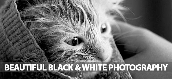 40 Beautiful Black and White Photography