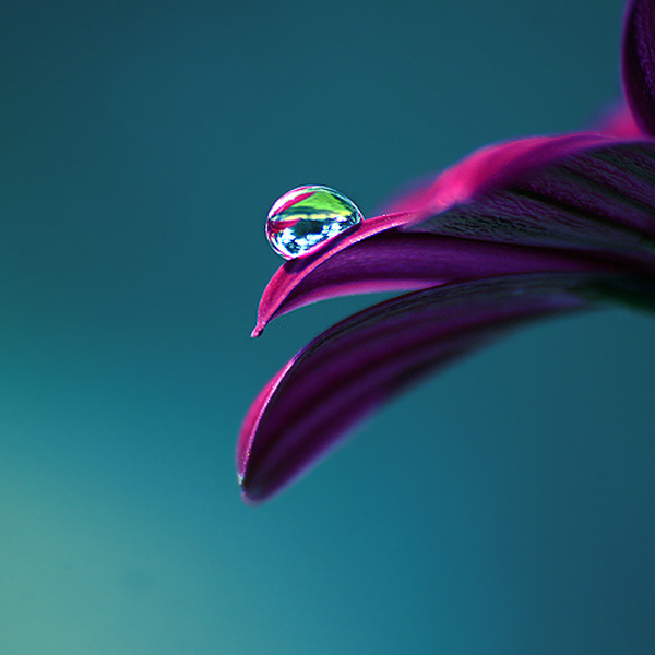 40 Awesome Examples Of Water Drop Photography | Photography ...