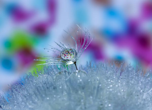 Beautiful Water Drop Photography 3