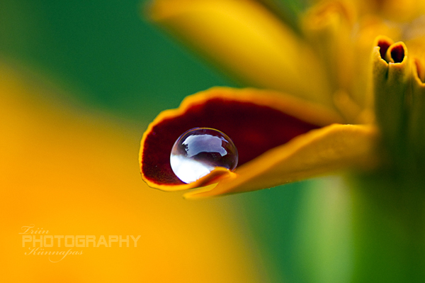 Water Drop Photography 37