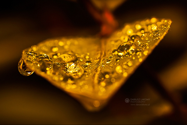 Water Drop Photography 38