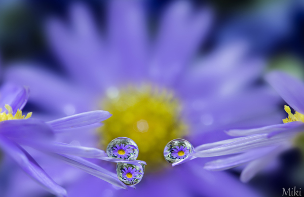 Beautiful Water Drop Photography 5
