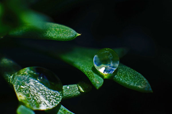 Waterdropphotography30