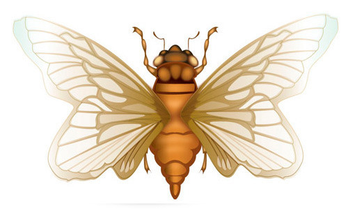 How to Create a Cicada in Adobe Illustrator