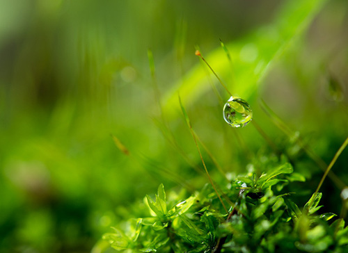Water Drop Photography - 15