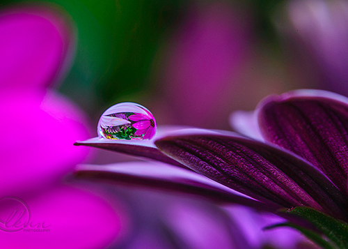 Water Drop Photography - 18