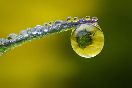 Water Drop Photography - 26