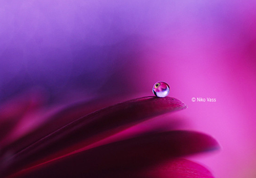 Water Drop Photography - 36
