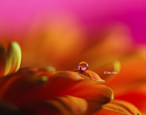 Water Drop Photography - 39