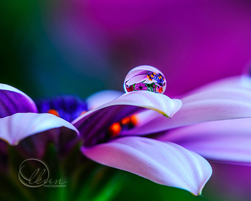 Water Drop Photography - 40