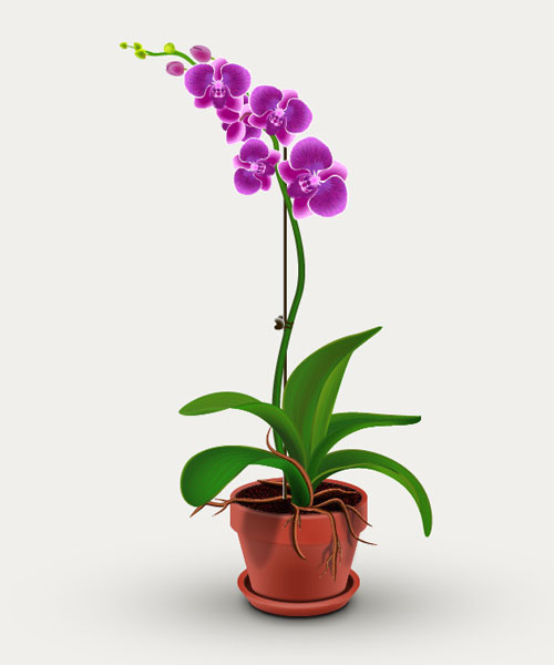 How to Create Orchid Plant in Adobe Illustrator
