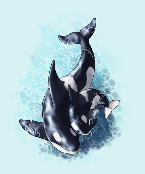 How to Draw Animals: Dolphins, Whales and Porpoises in Illustrator