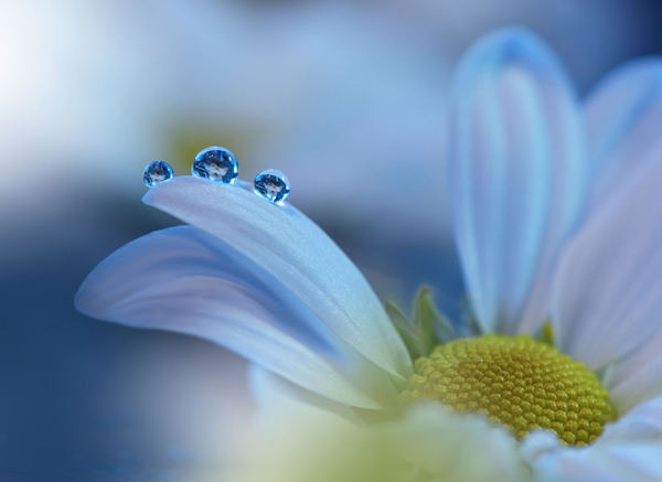 Water Drop Photography - 10