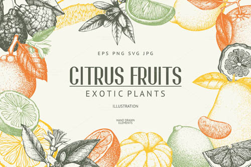 Vintage Citrus Fruits Sketch Set